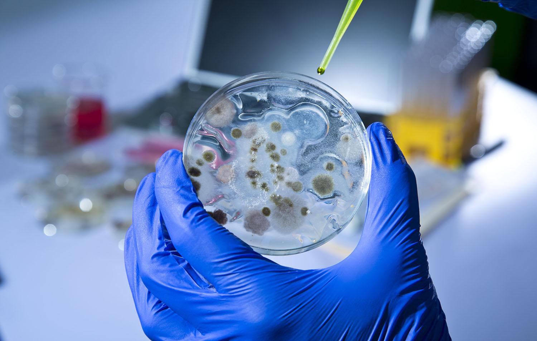 Testing Lab Analysis: Mold, Legionella, Asbestos